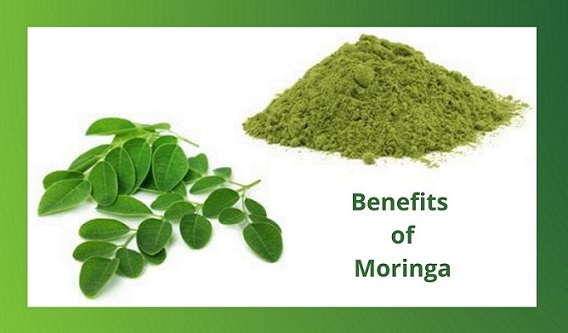 Moringa, What Is It and Why Do We Need It?